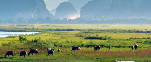 Vietnam from North to South, the essentials (12 days)