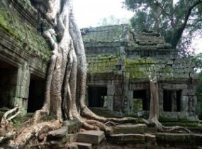 Ta Prohm at dawn, Kbal Spean hike and Banteay Srei (1 Day)
