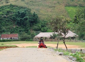 The evergreen plateau of Moc Chau