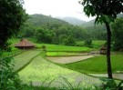 Rice farming experience & Kuang Si waterfall